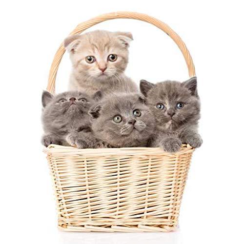 Specxs microvezeldoek - dieren - katten in mand - geschikt voor alle optische oppervlakken (18x18cm) - wasbaar
