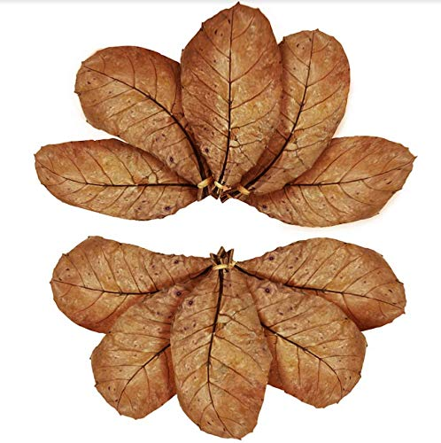 SunGrow Catappa Indian Almond Leaves, Best Way to Create Tropical Rainforest Environment for Betta &...
