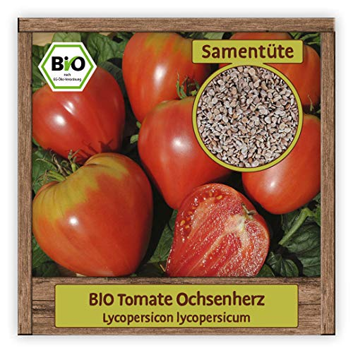 BIO Tomaten Samen Ochsenherz Saatgut Gemüsesamen alte historische Sorte Ochsenherz