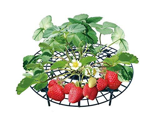 UPP Erdbeerreifer & Fruchtreifer | Einstellbare Stützen für Erdbeeren Salat und Tomaten | Schneckenschutz und Schutz vor Fäulnis und Schimmel [10er Set]