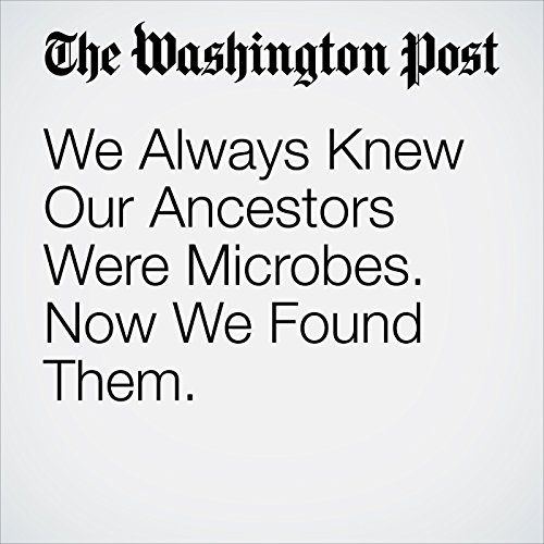We Always Knew Our Ancestors Were Microbes. Now We Found Them. copertina
