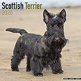 Scottish Terrier Calendar 2020...