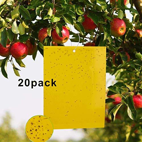 XUNKE Fliegenfalle Gelbstecker, 20 Stuck Gelbsticker doppelseitige klebrige Insektenfalle Naturen Fliegenfänger für weiße Fliegen, Blattläuse, Motten und Pilz-Mücken (20x25cm)