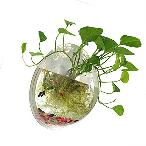 NNuodekeU 1 Gallon duidelijk acryl opknoping muur gemonteerd vis kom Aquaponic Tank Aquariums Plant vis Bubble