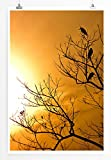 Eau Zone Home Bild - Landschaft Natur – Paddyreiher in