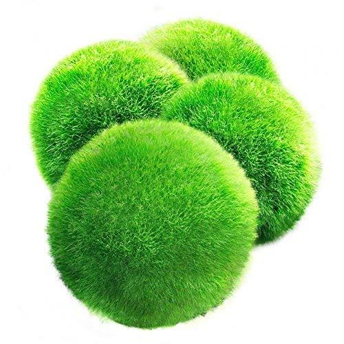 4 palline di muschio gigante Marimo LUFFY, esteticamente belle e creano un ambiente sano, a bassa manutenzione, adatte a tutte le dimensioni dell'acquario, gamberetti e lumache le adorano