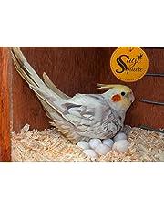 Sage Square Natural Soft Wood Shaving Bedding/Nesting Material for Birds (150 gm)
