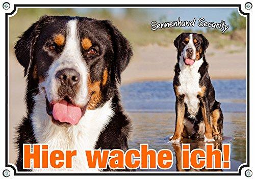 Petsigns Hundeschild Großer Schweizer Sennenhund - Metallschild Premium Qualität, DIN A4