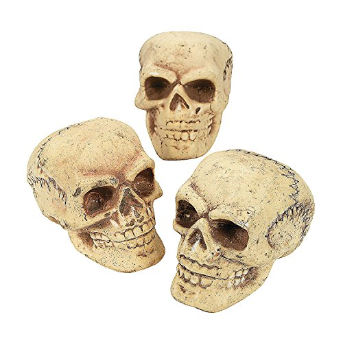 Fun Express Small Skulls for Halloween - Set of 3 - Use for Shrunken Heads and Scary Home Decor
