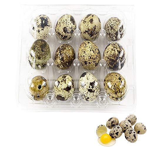 Quail Egg Cartons,50 Pack of 12 Grids Small Eggs Carton Holders for Quail Pheasant Pigeon Eggs Storage