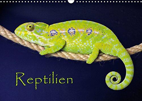 Reptilien (Wandkalender 2018 DIN A3 quer): (Mein) leben im Terrarium (Monatskalender, 14 Seiten ) (CALVENDO Tiere) [Kalender] [Apr 01, 2017] Sushi, der