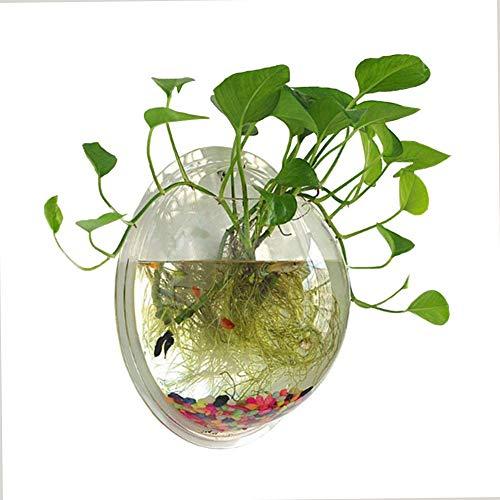 NGLUHAO 1 galón de acrílico transparente colgante montado en la pared pecera Aquaponic tanque acuarios planta peces burbuja
