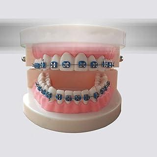 Dental Tooth Model Dental Material Teaching Aid Orthodontic Correction Model Teaching Oral Dental Learning Model