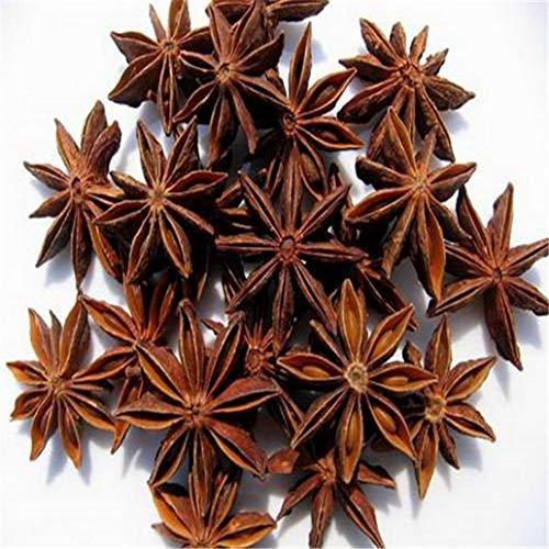 lamta1k 20Pcs Sternanis Samen Medicinal Aromatics Kochen Spice Garden Farm Yard Pflanze - Sternanis Samen