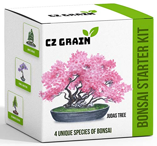 Bonsai Tree Kit - Grow 4 Types of Bonsai Tree from Seed - Highly Desired Species