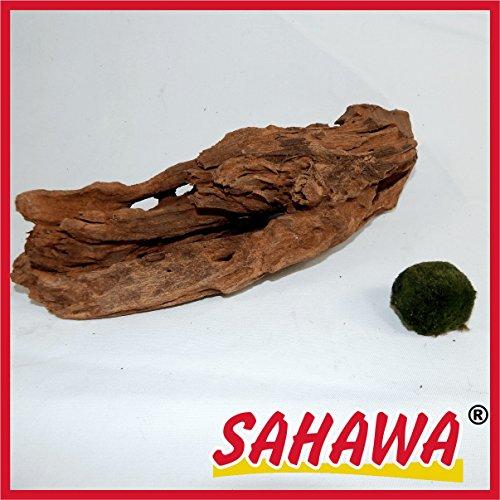 SAHAWA Wurzel,1 Mangrovenwurzel, Mangrove, Aquariumwurzel+ Mooskugel Gratis Aquarium, Terrarium Deko ca. 20-26cm