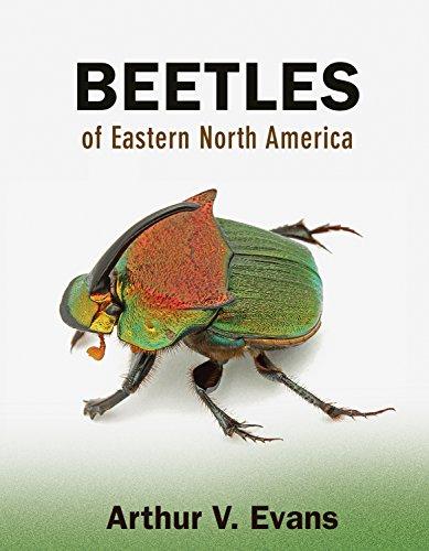 Image of Beetles of Eastern North America