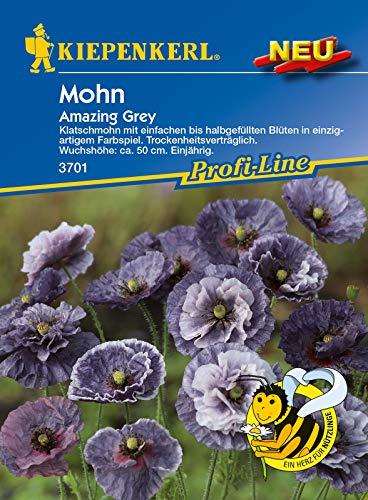 Papaver Amazing Grey, Klatschmohn mit einfachen bis halbgefüllten Blüten, trockenheitsverträglich