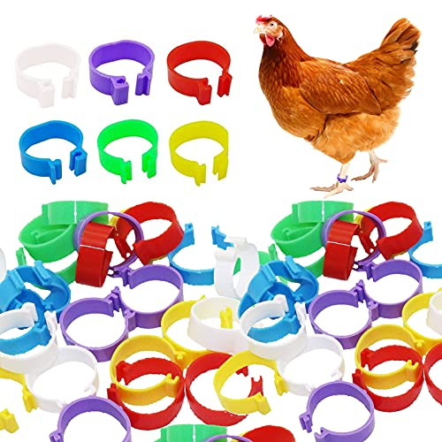 150 Pcs Bird Chicken 25mm Foot Ring Bands - Chicken Identification Leg Bands Numbered Clip Poultry Leg Bands Tags for Small Poultry Chicken Pigeon Dove Chicks Bantam Quail Lovebirds Finch Mix Color