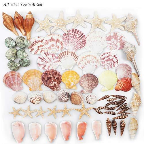 Conchas de mar Conchas de playa mixtas 9 clases 3-9 CM Conchas naturales y 2 clases Estrella de mar para playa Fiesta temática Decoraciones de boda Manualidades DIY Decoraciones
