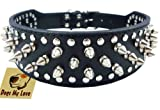 19'-22' Black Faux Leather Spiked Studded Dog Collar 2' Wide, 37 Spikes 60 Studs, Pitbull, Boxer