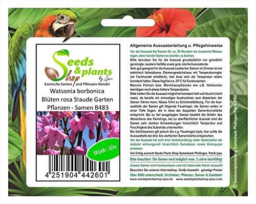 Stk - 10x Watsonia borbonica Blüten...