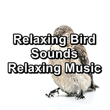 Relaxing Bird Sounds Relaxing Music