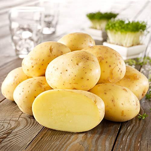 Qulista Samenhaus - Rarität 50pcs BIO Kartoffel Anuschka ertragreich, frühe, festkochende Sorte, aromatisch Gemüsesamen winterhart mehrjärhig