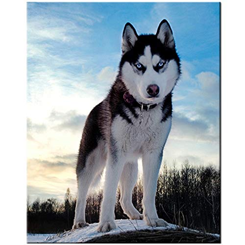 5D Round Drill DIY Diamond Painting Lovely Husky Dog Diamond Embroidery Cross Stitch Rhinestone Wedding Decoration