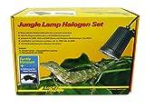 Lucky Reptile &apos jlt de 1Jungle Lamp Set Turtle