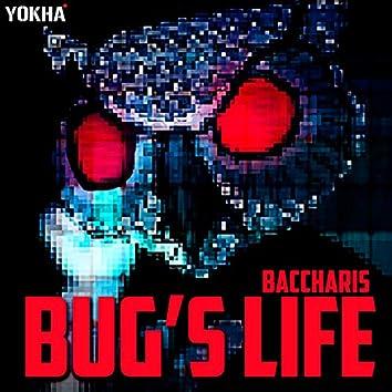 Bug`s Life