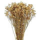 DWANCE 4 Piezas Flores Secas de Centranthera Tranquebarica Ramos de Flores Secas Naturales Flores Secas Decoracion para Hogar Boda Restaurante 43 cm