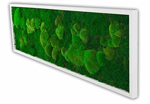 Moosbilder, Moosbild, Pflanzenbild mit Kugelmoos und Flachmoos 140x40 cm mit Vollholzrahmen weiß Wanddeko Bilderrahmen Bilder Wandbilder Wandbild mit Moos Mooswand Deko Geschenk Moss