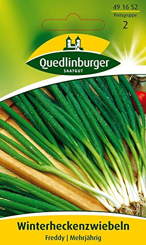 Zwiebelsamen - Zwiebel Winterhecken Freddy von Quedlinburger Saatgut