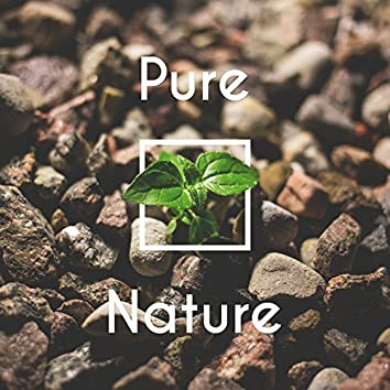 Pure Nature – Relaxing Nature Sounds, Inner Peace, Listen New Age Music, Deep Sounds for Relaxation