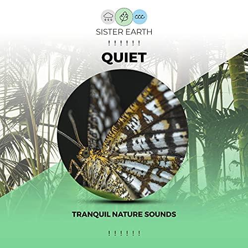 Sleep Sounds of Nature