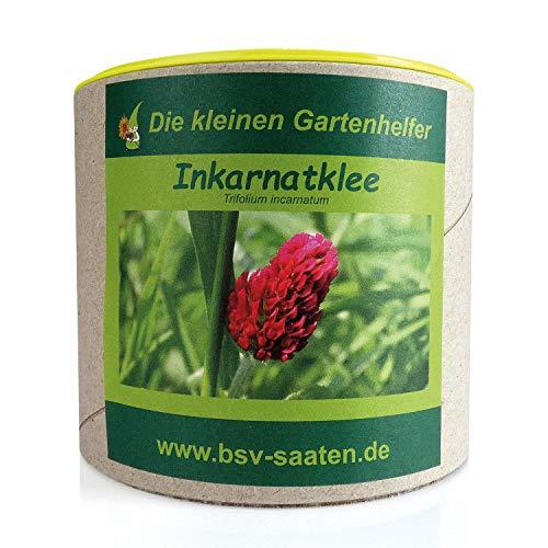 Keimsamen Inkarnatklee 300g I Samen zur Bodenverbesserung I Zertifiziertes Saatgut Gründüngung I Inkarnat Klee Samen für 50 m²
