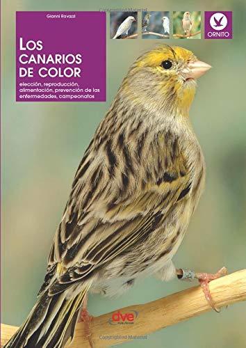 Los canarios de color