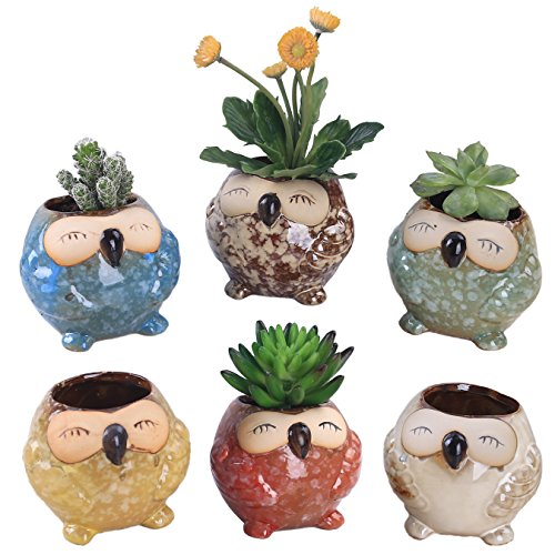 rczh 6PZ. 3pollici gufo Vasi di Ceramica, Piccolo Succulente Bonsai Pentole con un foro–Confezione da 6(grande gufo)