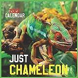 Just CHAMELEON CALENDAR 2022: Official Chameleons Calendar 2022 ,12 Months ,Square Calendar 2022