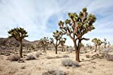 Joshua Tree National Park California Desert Landscape Photo Cool Wall Decor Art Print Poster 36x24
