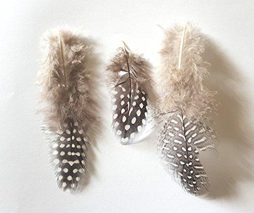 Set 5 pièces 3D Nail Art plumes Gris Design poule Nail Art Manucure Pédicure einleger Accessoires