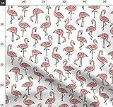 Flamingos, Flamingo, Exotisch, Tropisch, Brasilien, Vögel,