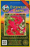 Everwilde Farms - 1000 Red Drummond Phlox...