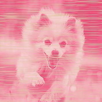 純粋-かわいい犬