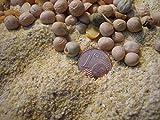Guisantes harina 10 kg proteína de Guisante