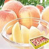 国華園 大特価 山形の白桃 5㎏ 冷蔵便 1組 もも 桃 ピーチ フルーツ