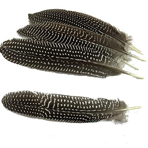 Sowder 20pcs Guinea Fowl Wing Quill Pheasant Plumage Feathers 6-8 Inch for Home Wedding Decoration