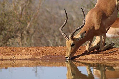 Rompecabezas para Adultos 1000 Piezas África Pond Impala Agua Potable Juegos Educativos Juguetes Bonito Regalo Rompecabezas De Ensamblaje para Adultos 38Cmx26Cm