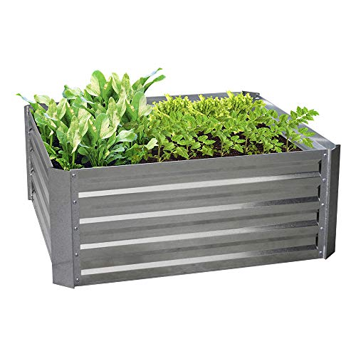 BLUEBERRY HILL Galvanized Raised Garden Bed 40Lx40Wx16H Inch Steel Outdoor Planters for Flower Herb Garden  16 Inch Extra Tall Great to Grow Fruit and Root Vegetables
